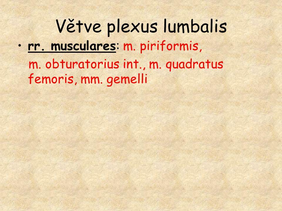 Větve plexus lumbalis rr. musculares: m. piriformis,