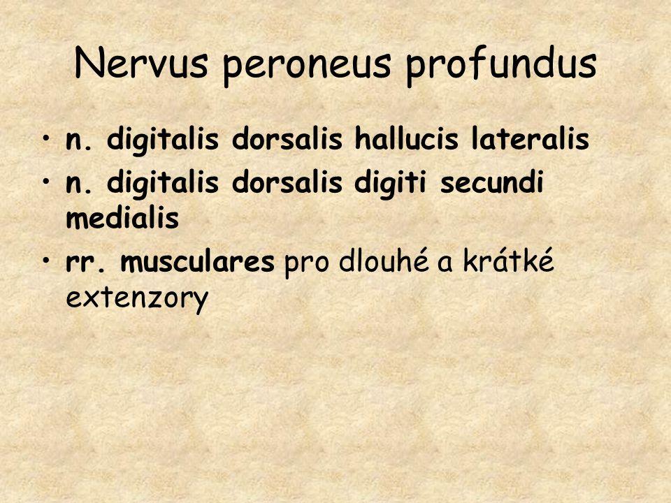 Nervus peroneus profundus