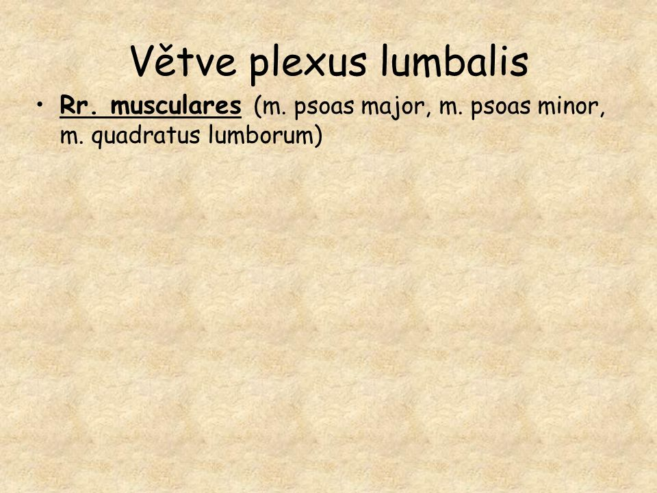 Větve plexus lumbalis Rr. musculares (m. psoas major, m. psoas minor, m. quadratus lumborum)