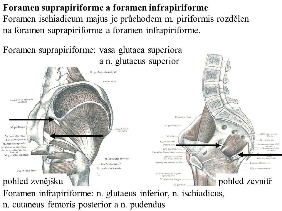 Foramen suprapiriforme a foramen infrapiriforme
