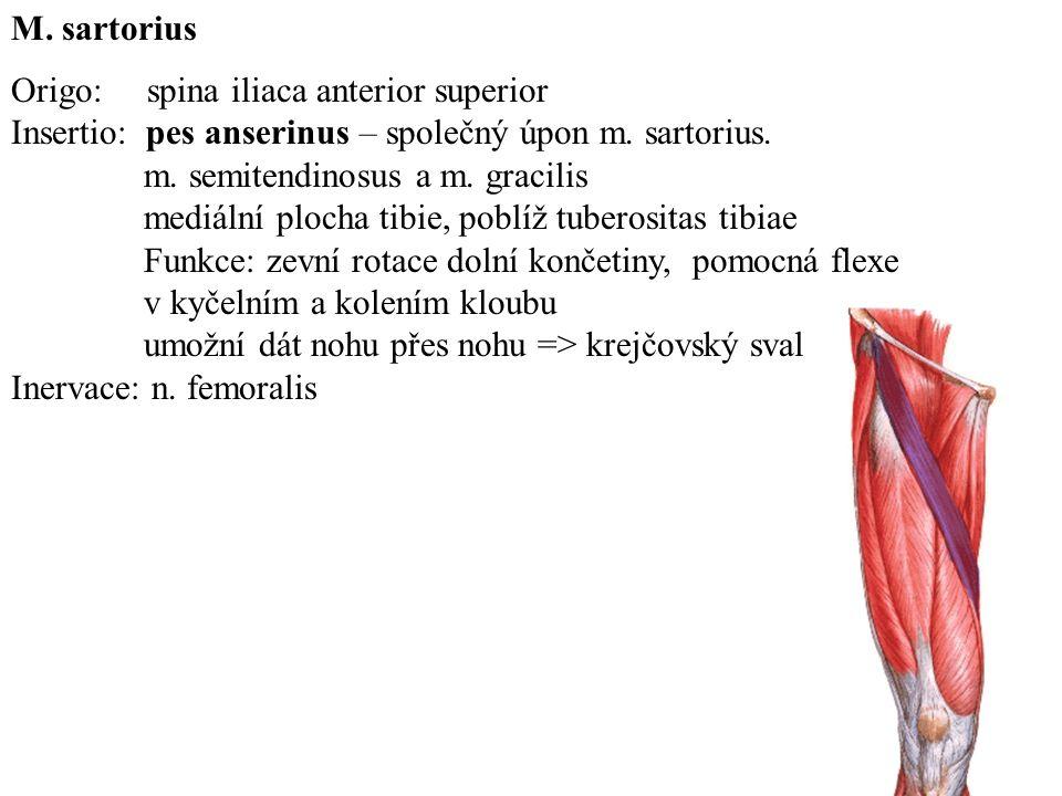 M. sartorius Origo: spina iliaca anterior superior. Insertio: pes anserinus – společný úpon m. sartorius.