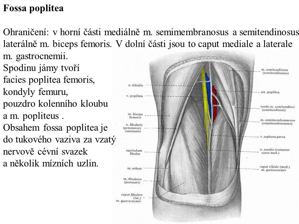 Fossa poplitea Ohraničení: v horní části mediálně m. semimembranosus a semitendinosus.