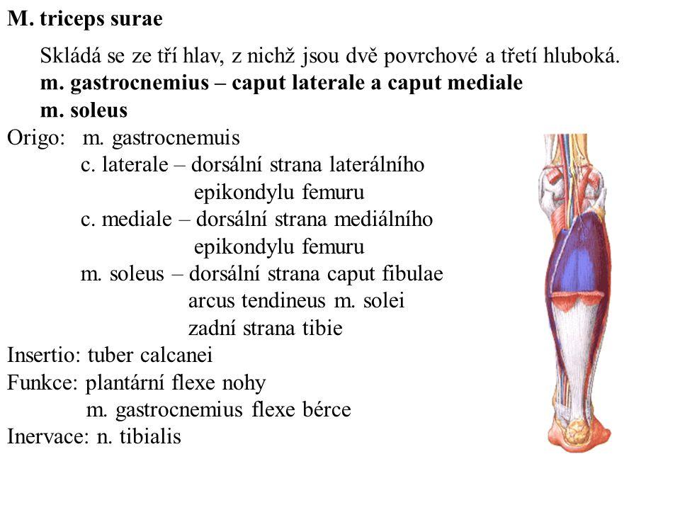 Ausgezeichnet Gastrocnemius Mediale Fotos - Menschliche Anatomie ...