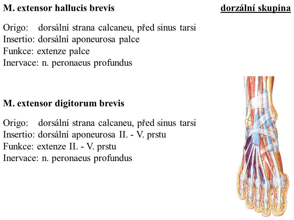 M. extensor hallucis brevis