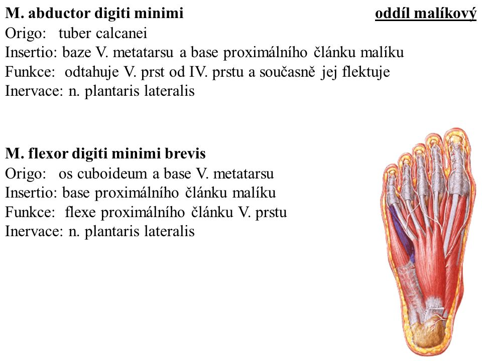 M. abductor digiti minimi