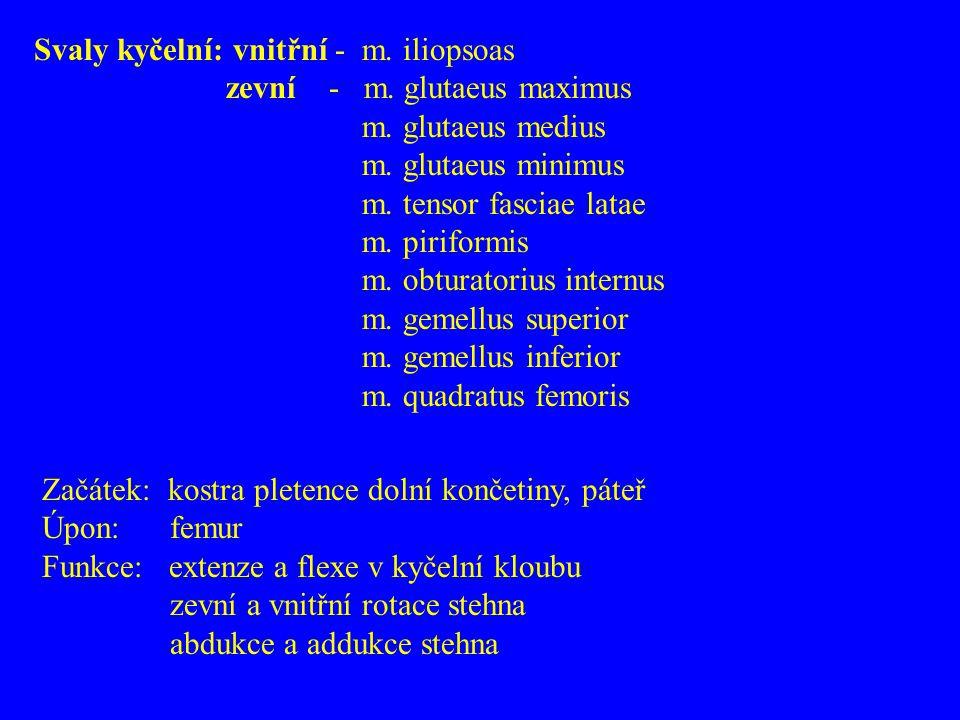 Svaly kyčelní: vnitřní - m. iliopsoas