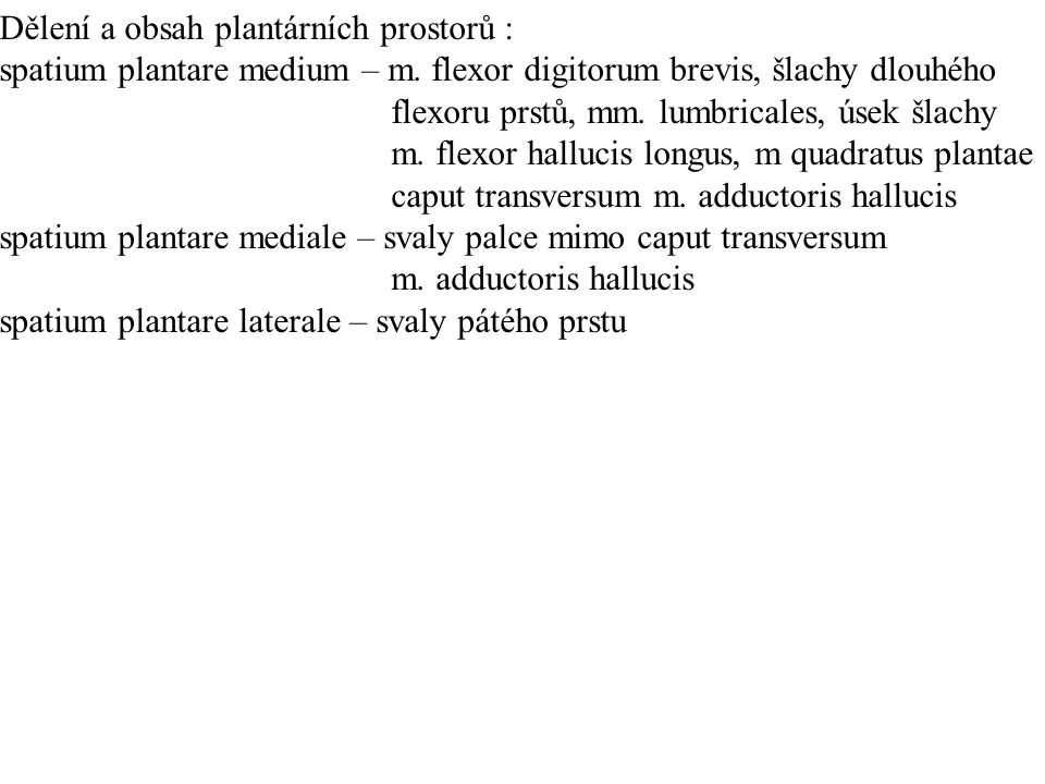 Dělení a obsah plantárních prostorů :