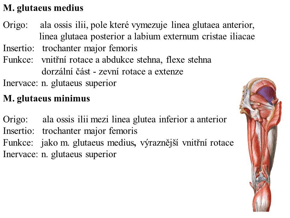 M. glutaeus medius Origo: ala ossis ilii, pole které vymezuje linea glutaea anterior, linea glutaea posterior a labium externum cristae iliacae.