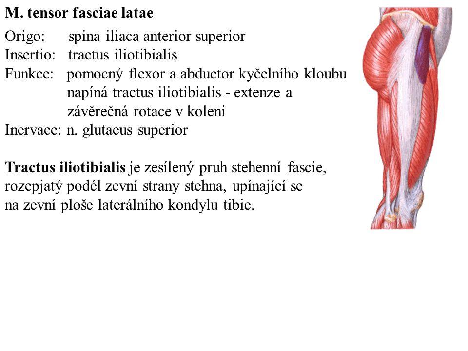 M. tensor fasciae latae Origo: spina iliaca anterior superior. Insertio: tractus iliotibialis.