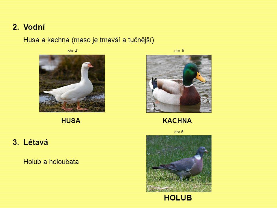 2. Vodní 3. Létavá HOLUB Husa a kachna (maso je tmavší a tučnější)