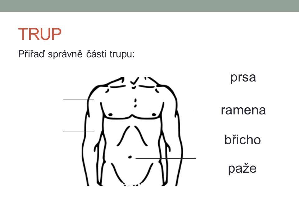 TRUP Přiřaď správně části trupu: prsa ramena břicho paže