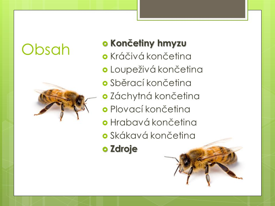 Obsah Končetiny hmyzu Kráčivá končetina Loupeživá končetina