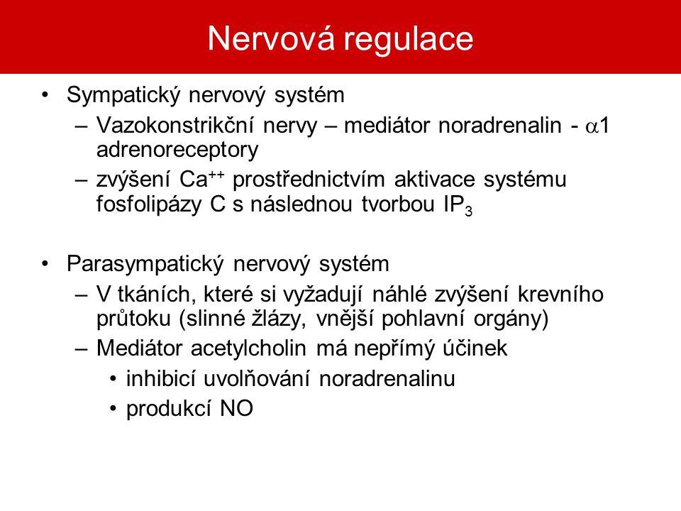 Nervová regulace Sympatický nervový systém