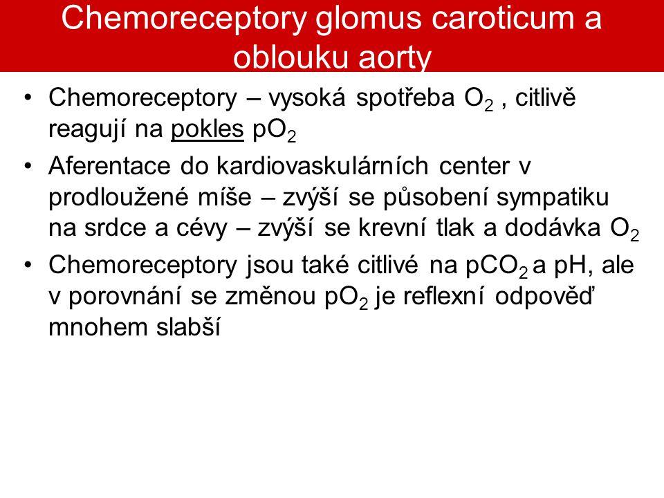 Chemoreceptory glomus caroticum a oblouku aorty