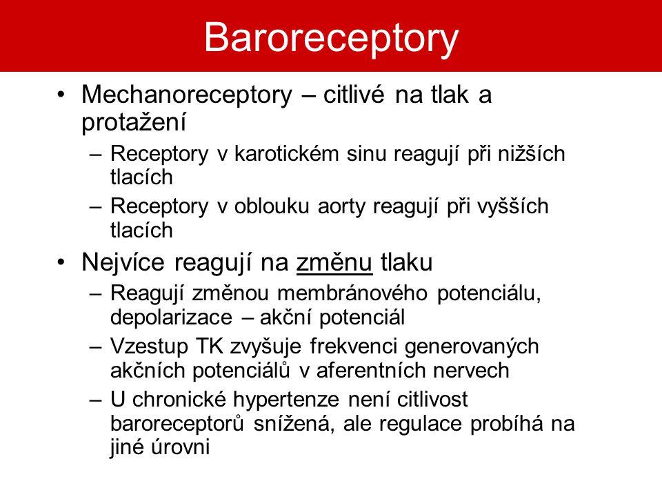 Baroreceptory Mechanoreceptory – citlivé na tlak a protažení
