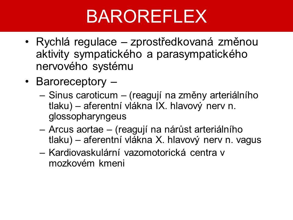 BAROREFLEX Rychlá regulace – zprostředkovaná změnou aktivity sympatického a parasympatického nervového systému.