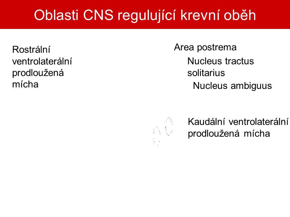 Oblasti CNS regulující krevní oběh