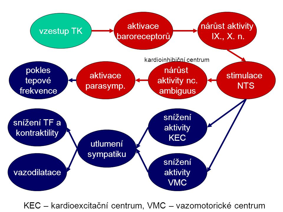 KEC – kardioexcitační centrum, VMC – vazomotorické centrum