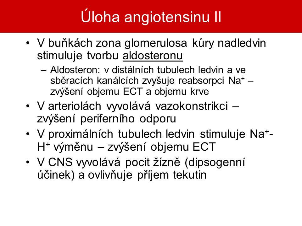 Úloha angiotensinu II V buňkách zona glomerulosa kůry nadledvin stimuluje tvorbu aldosteronu.