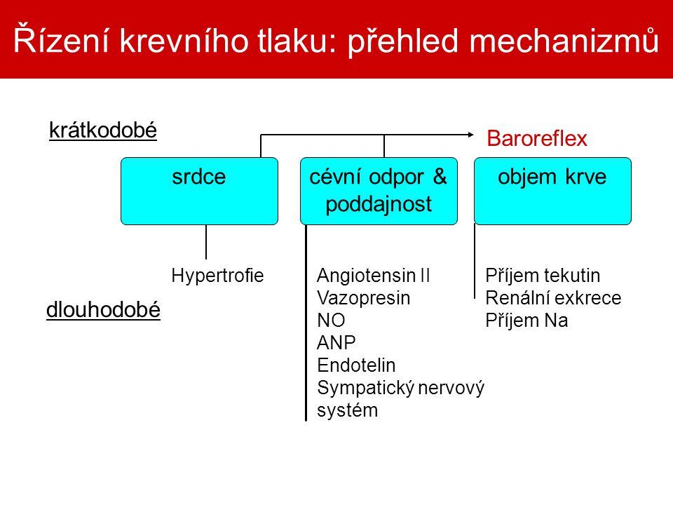 Řízení krevního tlaku: přehled mechanizmů