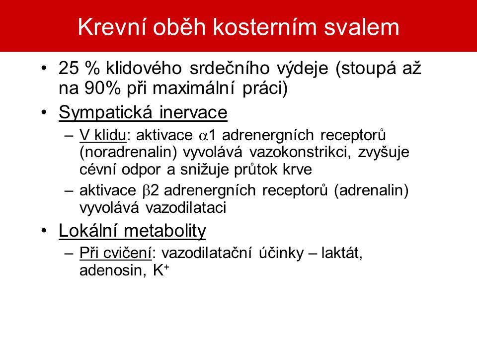 Krevní oběh kosterním svalem