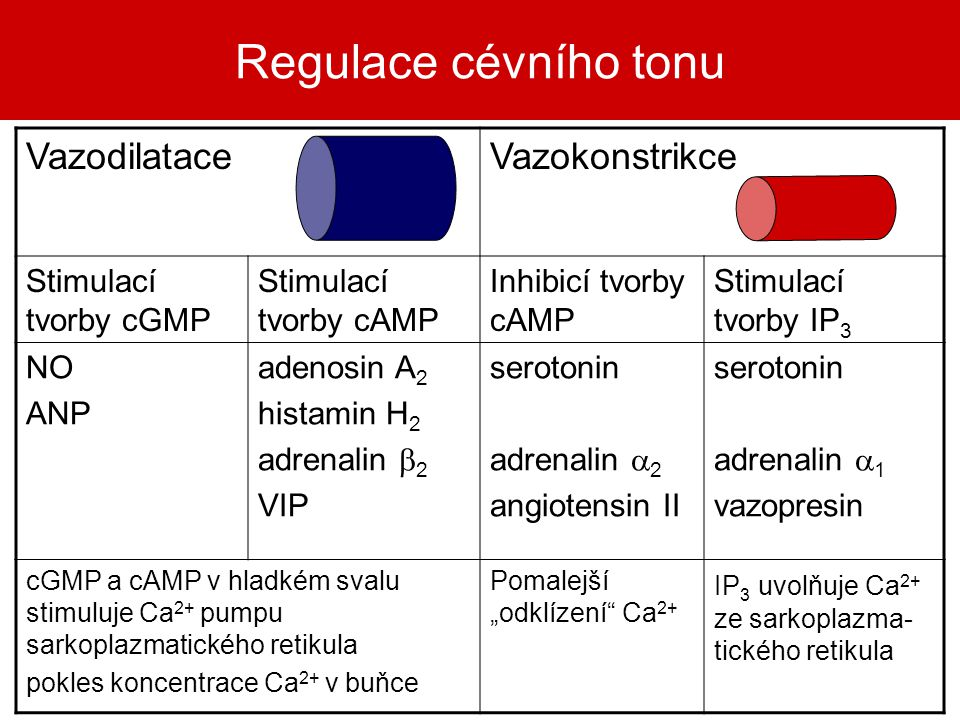 Regulace cévního tonu Vazodilatace Vazokonstrikce