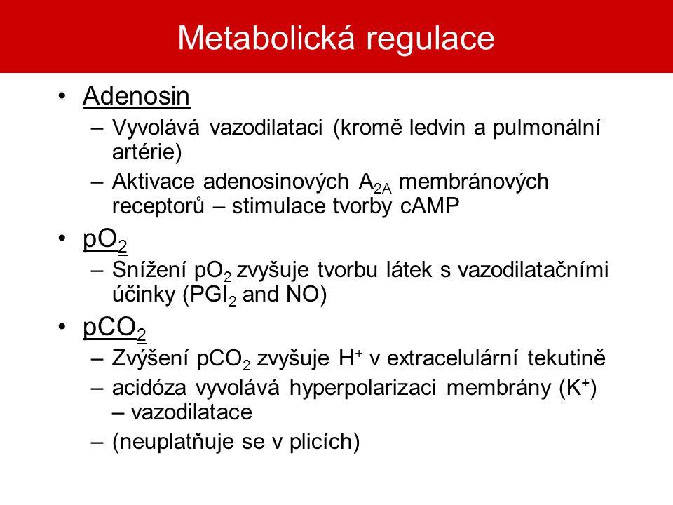 Metabolická regulace Adenosin pO2 pCO2