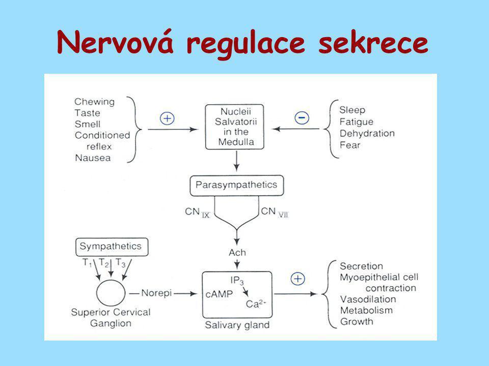 Nervová regulace sekrece