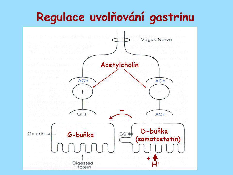Regulace uvolňování gastrinu