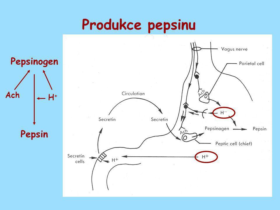 Produkce pepsinu Pepsinogen Ach H+ Pepsin