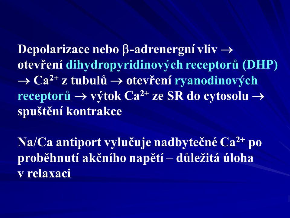 Depolarizace nebo -adrenergní vliv  otevření dihydropyridinových receptorů (DHP)  Ca2+ z tubulů  otevření ryanodinových receptorů  výtok Ca2+ ze SR do cytosolu  spuštění kontrakce