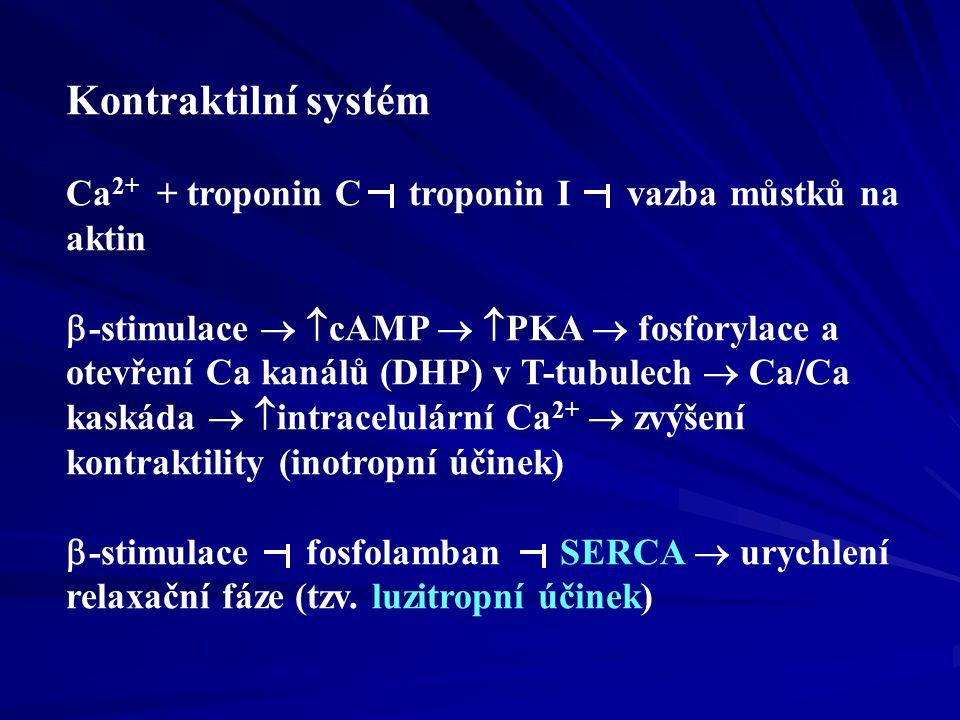 Kontraktilní systém Ca2+ + troponin C troponin I vazba můstků na aktin