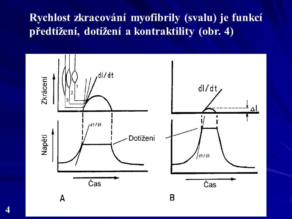 Rychlost zkracování myofibrily (svalu) je funkcí předtížení, dotížení a kontraktility (obr. 4)