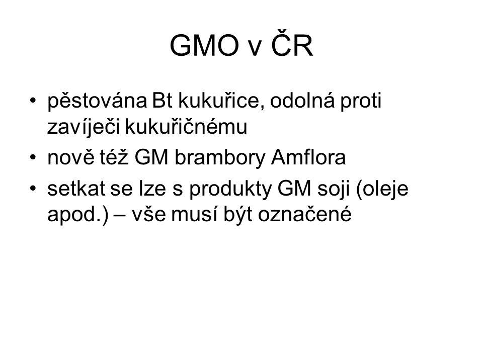 GMO v ČR pěstována Bt kukuřice, odolná proti zavíječi kukuřičnému