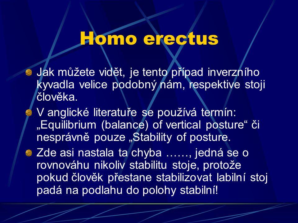 Homo erectus Jak můžete vidět, je tento případ inverzního kyvadla velice podobný nám, respektive stoji člověka.