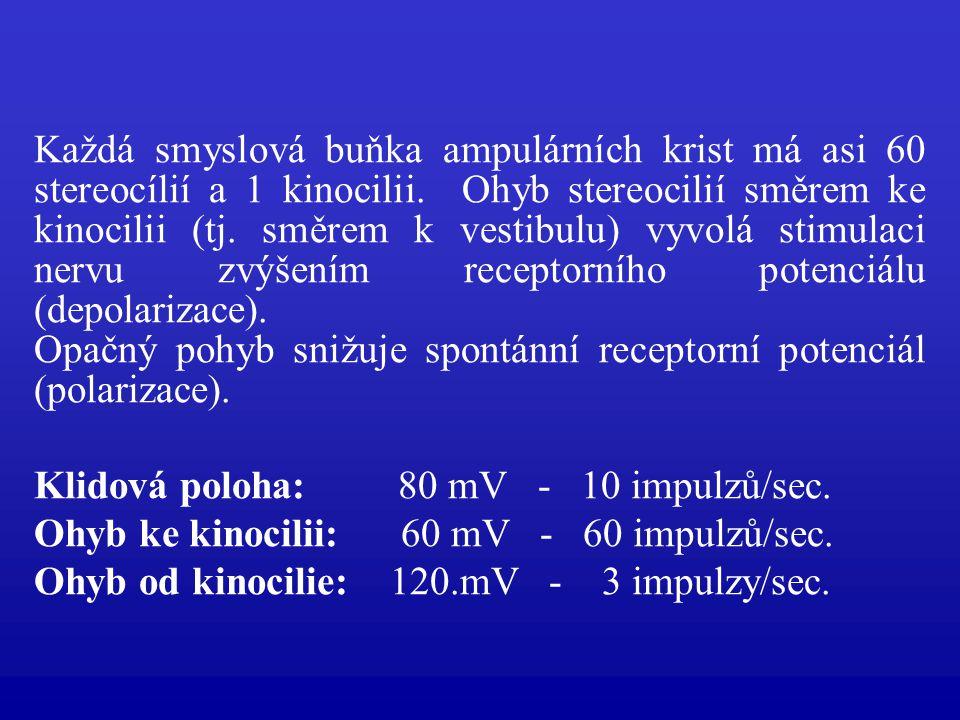 Každá smyslová buňka ampulárních krist má asi 60 stereocílií a 1 kinocilii. Ohyb stereocilií směrem ke kinocilii (tj. směrem k vestibulu) vyvolá stimulaci nervu zvýšením receptorního potenciálu (depolarizace).