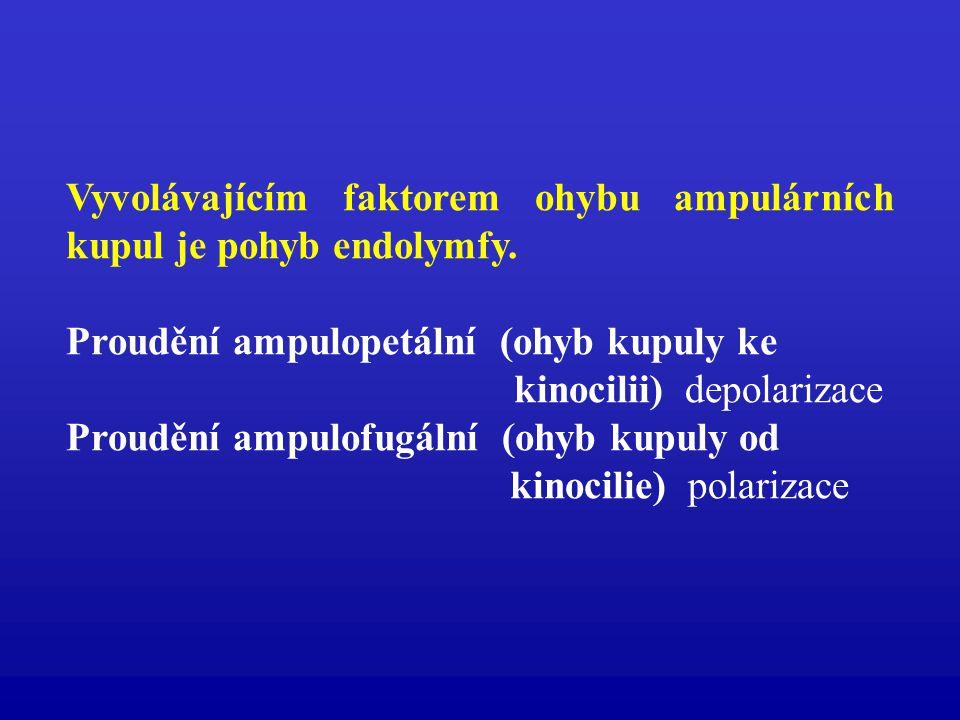 Vyvolávajícím faktorem ohybu ampulárních kupul je pohyb endolymfy.