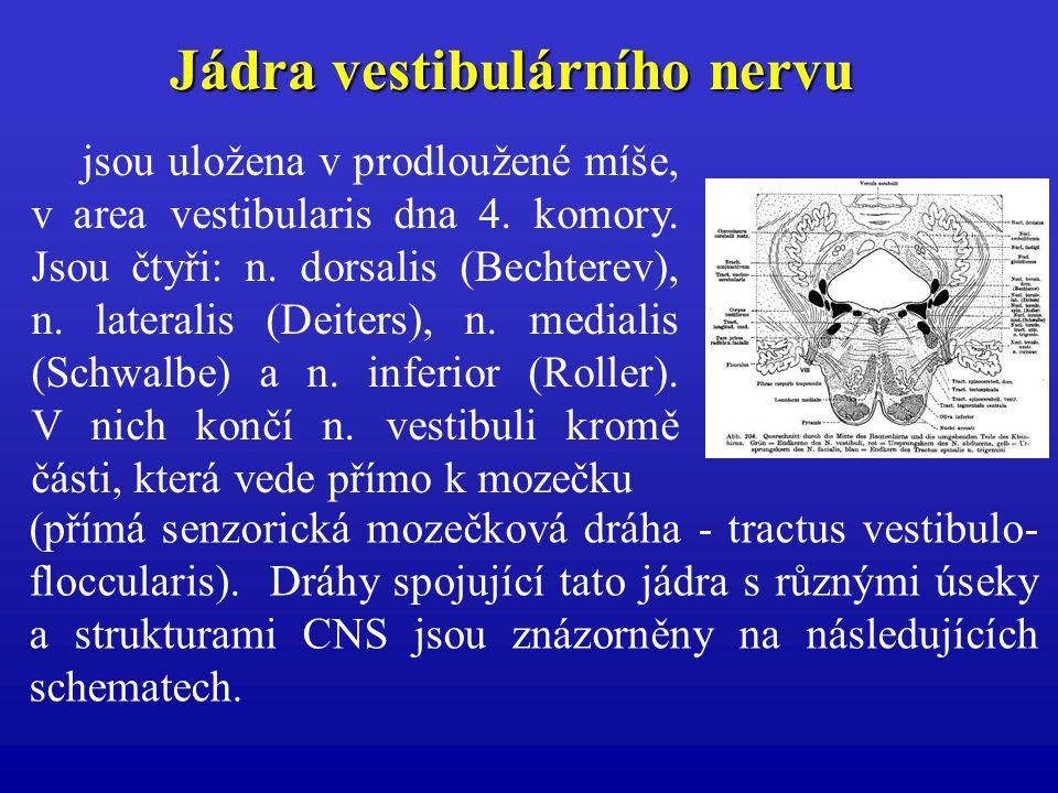 Jádra vestibulárního nervu