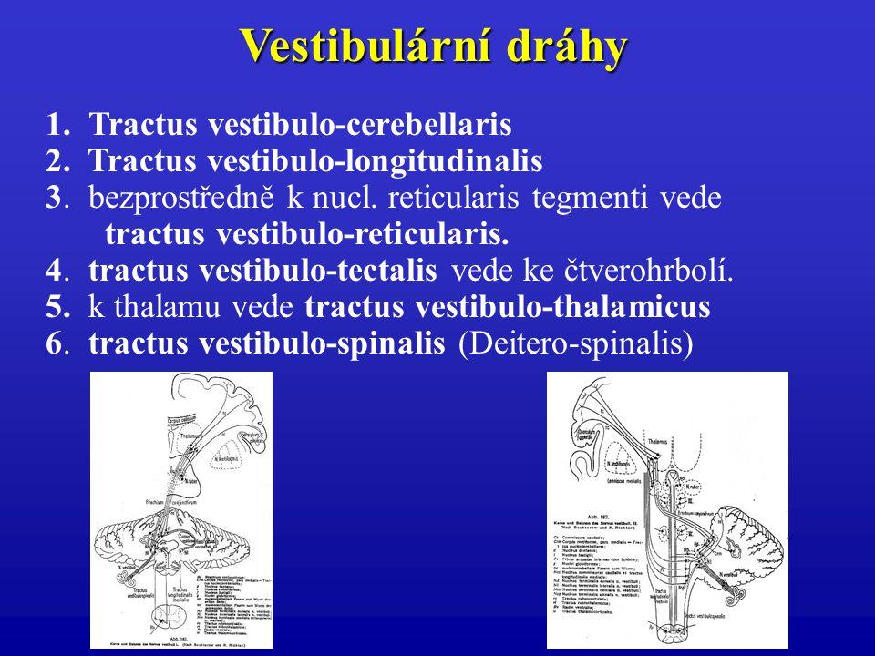 1. Tractus vestibulo-cerebellaris 2. Tractus vestibulo-longitudinalis