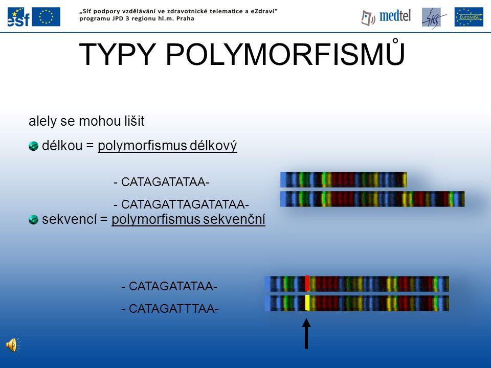 TYPY POLYMORFISMŮ alely se mohou lišit délkou = polymorfismus délkový