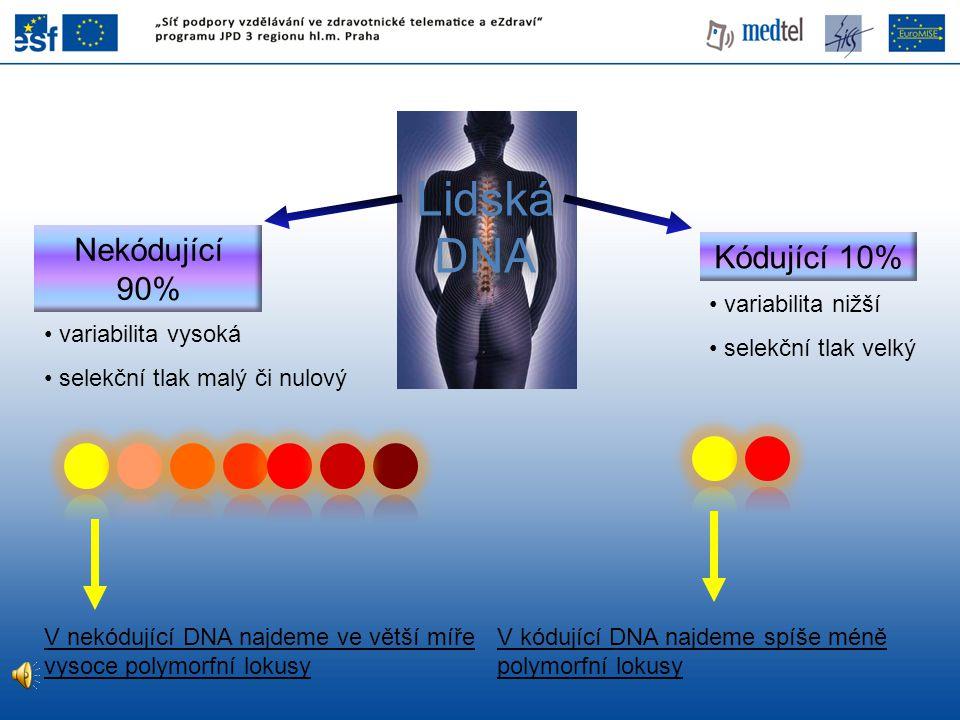 Lidská DNA Nekódující 90% Kódující 10% variabilita nižší