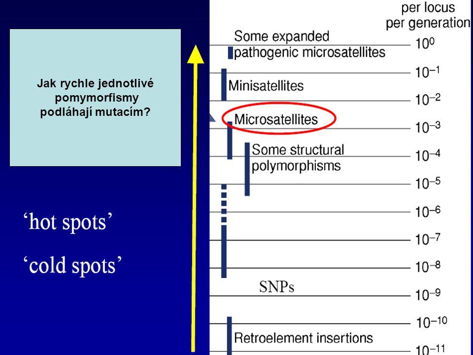 Jak rychle jednotlivé pomymorfismy podláhají mutacím
