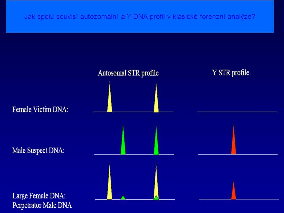 Jak spolu souvisí autozomální a Y DNA profil v klasické forenzní analýze
