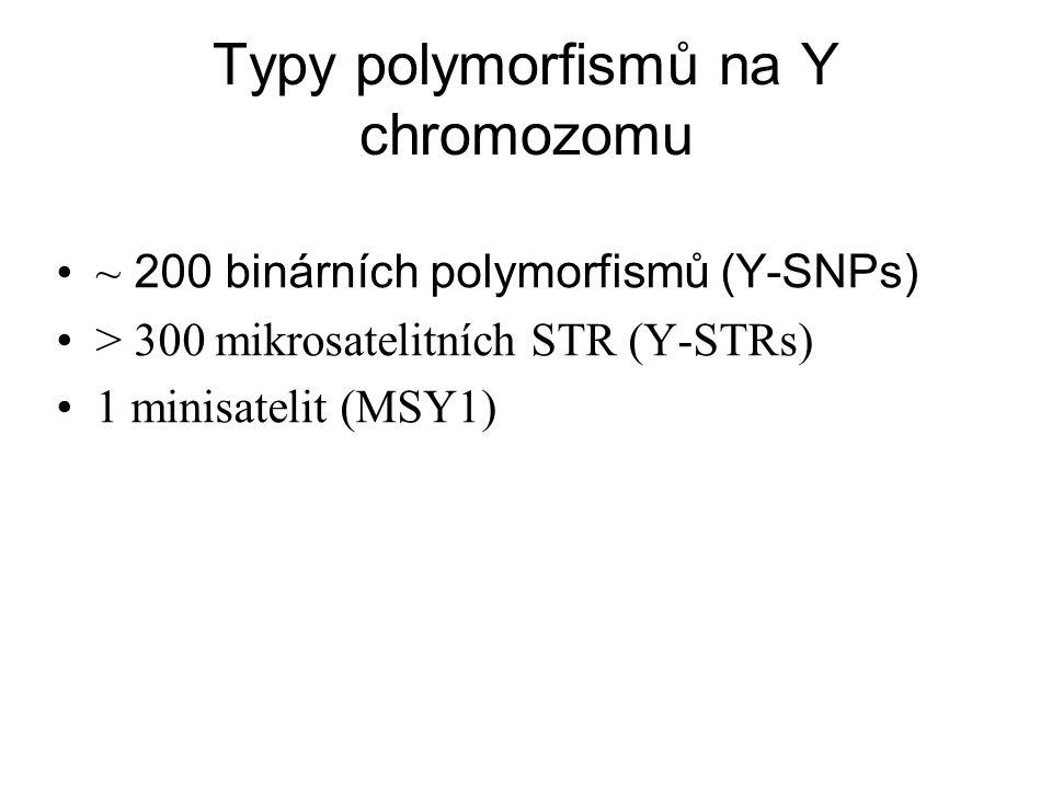 Typy polymorfismů na Y chromozomu