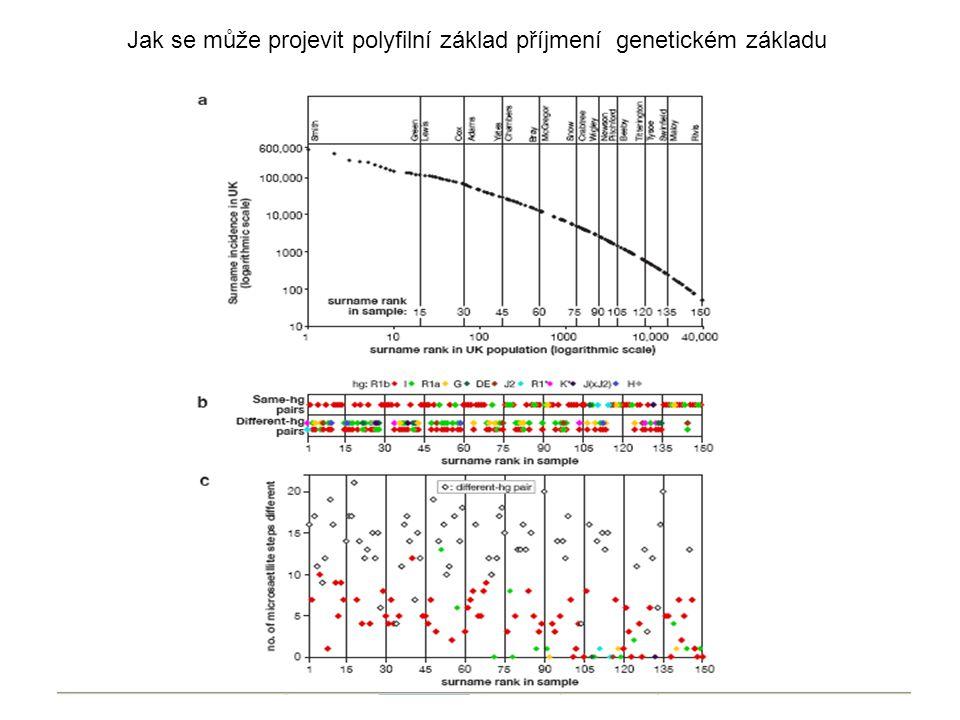 Jak se může projevit polyfilní základ příjmení genetickém základu