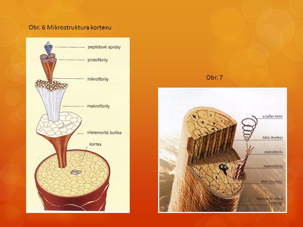 Obr. 6 Mikrostruktura kortexu