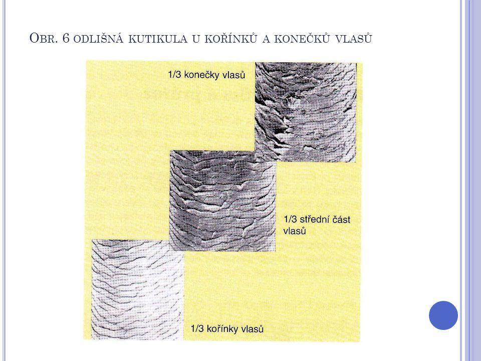 Obr. 6 odlišná kutikula u kořínků a konečků vlasů