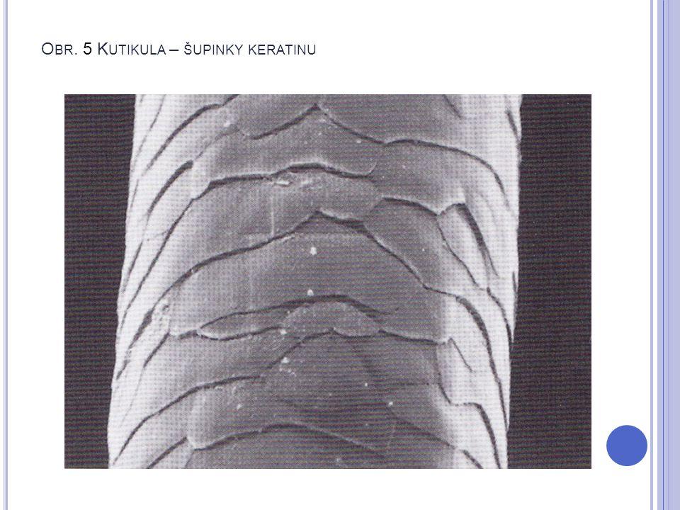 Obr. 5 Kutikula – šupinky keratinu