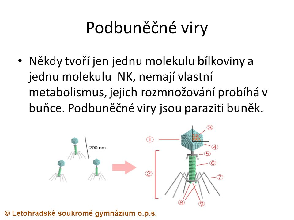 Podbuněčné viry