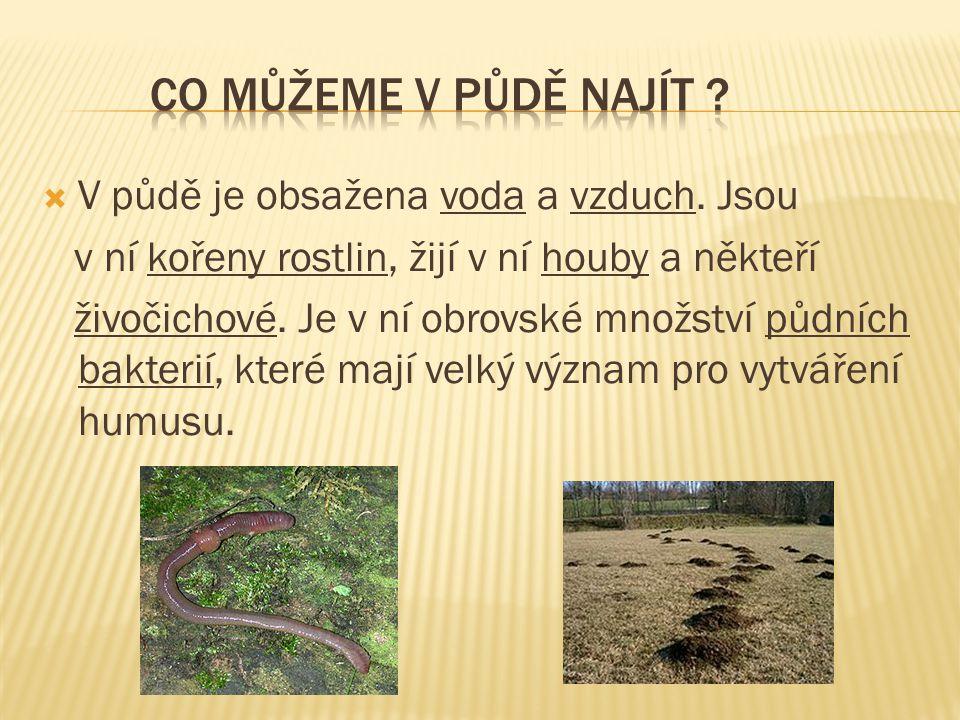 Co můžeme v půdě najít V půdě je obsažena voda a vzduch. Jsou